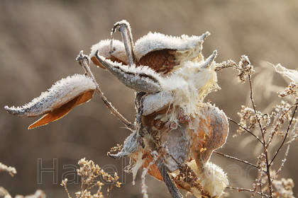MG 8619 