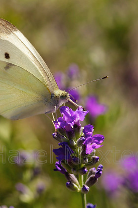MG 7585 - Version 2 