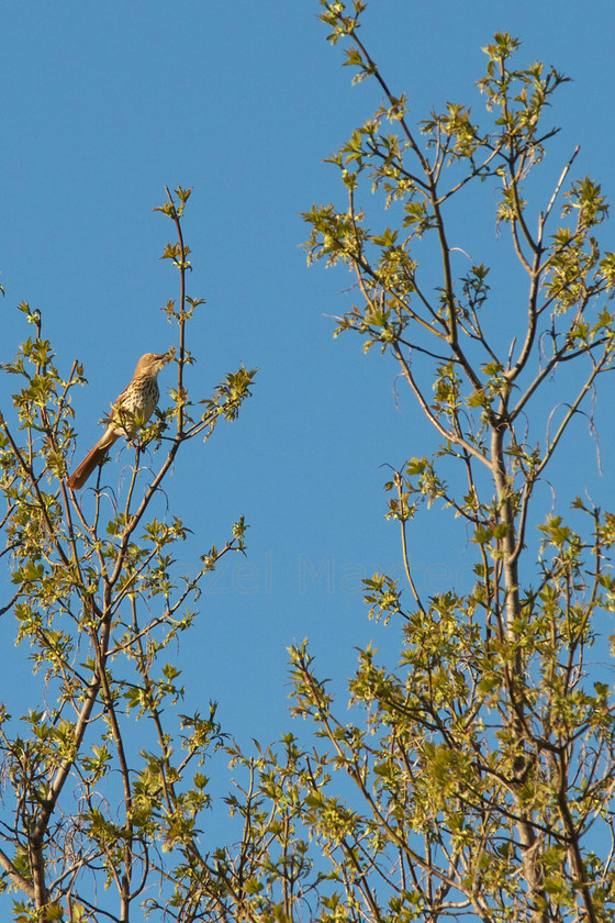MG 9205 