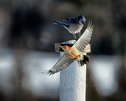MG 8721 