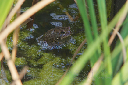 MG 3870 