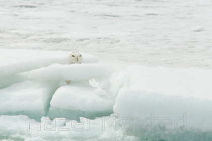 MG 1263 85 