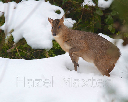 MG 3458 