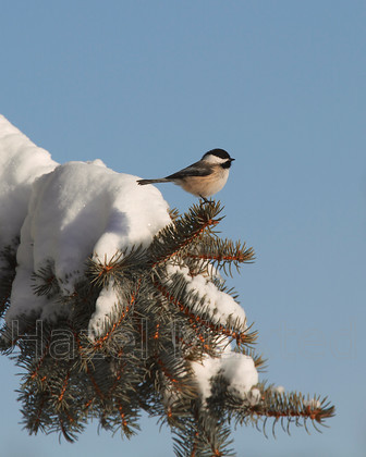 MG 8875 