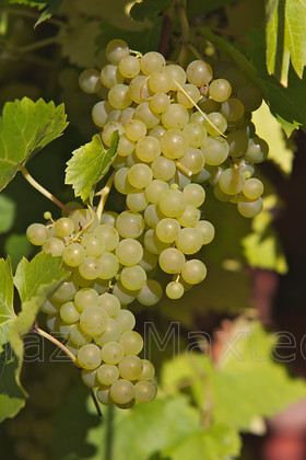 AUTUMN. BIRDS 10.10 14 