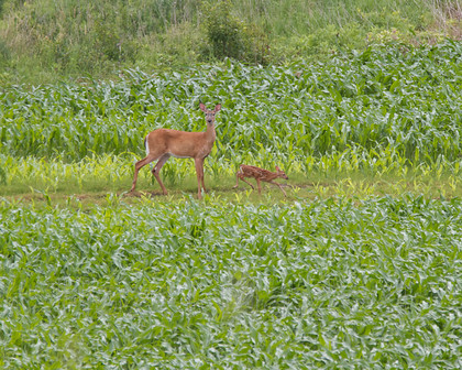 MG 6808 (1) 