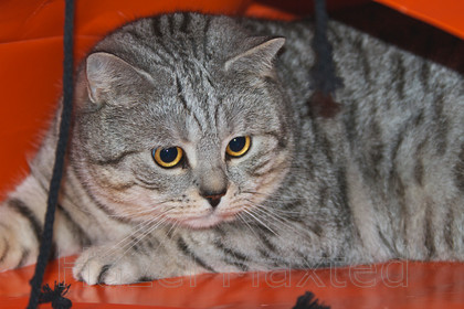 MG 3695 