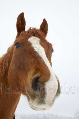MG 8990 