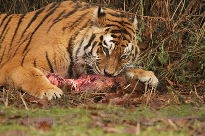 MG 2828 