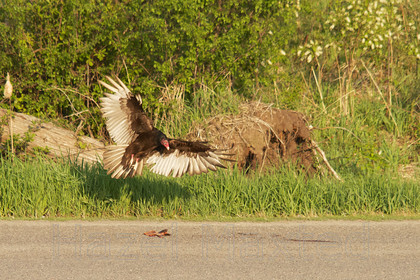 MG 9412 