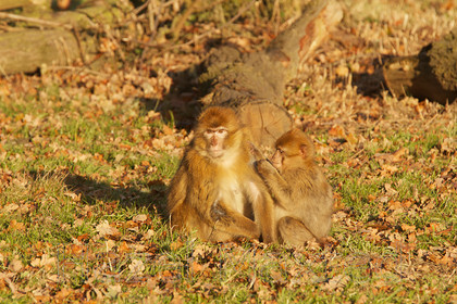 MG 3054 