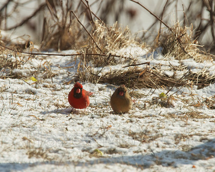 MG 8805 