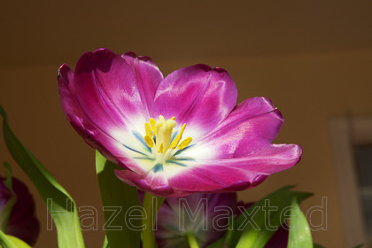 MG 8538 