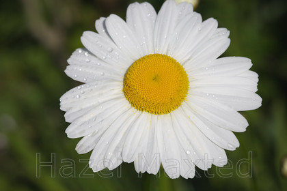 IMAGE FILE 