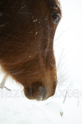 MG 8593 