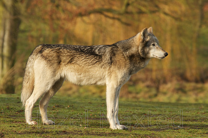 MG 2921 