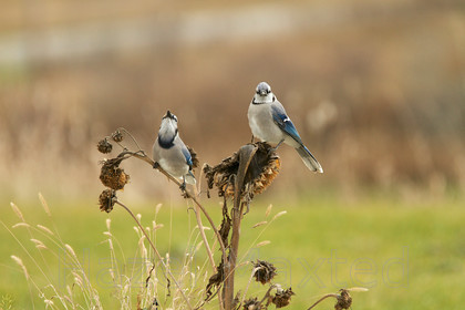2013 11 201311-16-21 MG 1585 ©HazelMaxted 