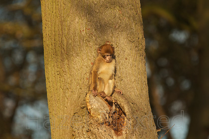 MG 3027 