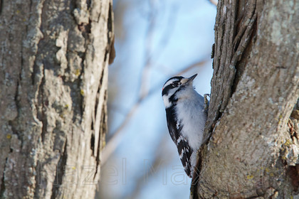 MG 2464722014-03-08 