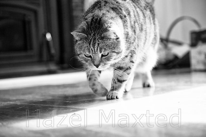 MG 9075 (1) 
