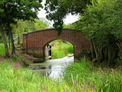 IMG 1114 