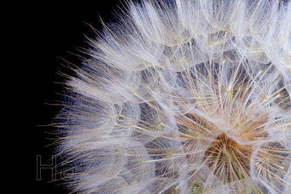 MG 7529 