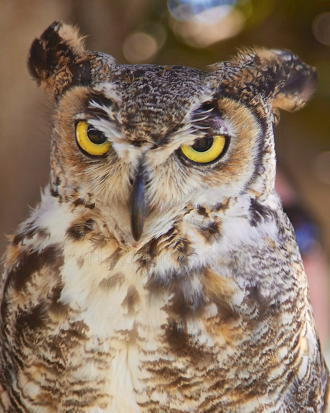 MG 3839 