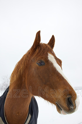 MG 8995 