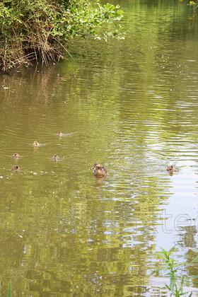 MG 3672 