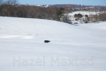MG 06531202014-01-27 