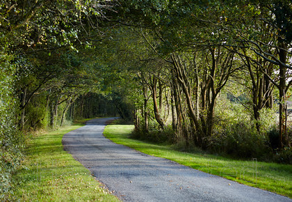 MG 4606 