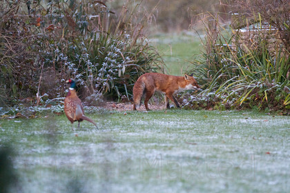 WindertonBB&Deer 1067 