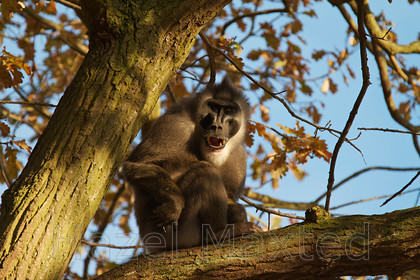 MG 3010 