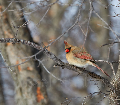 MG 0762 