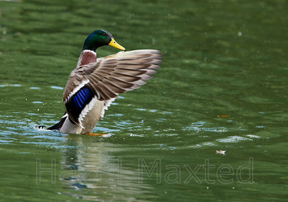 MG 4652 