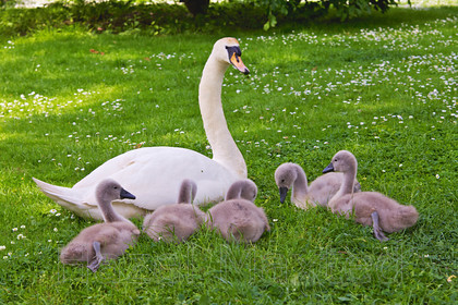MG 3676 