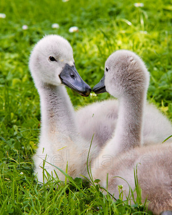 MG 3675 