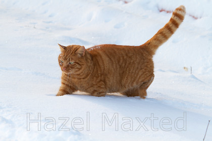 MG 3339 
