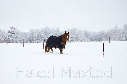 MG 8957 
