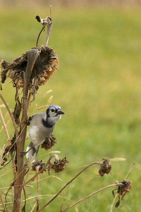 2013 11 201311-15-10 MG 1569 ©HazelMaxted 