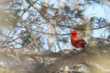 MG 2461692014-03-08 
