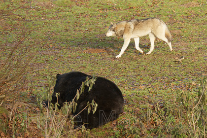 MG 2986 